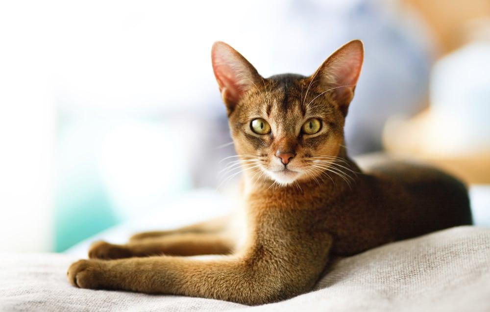 gato olha pra lente