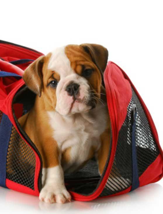 transporte de cães um dos serviços pet em mairiporã